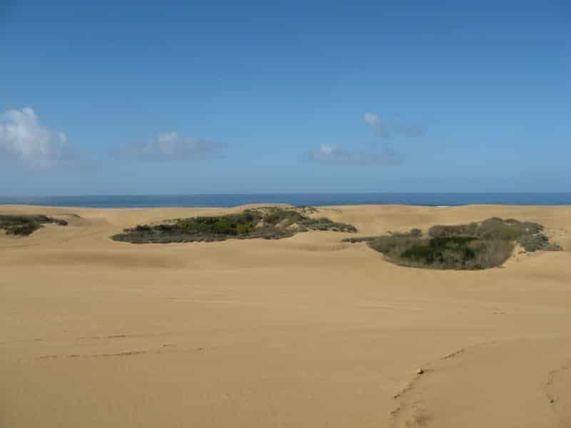 Vegetation islands at Oceano Dunes