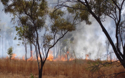New Study Points to Increase in High-risk Bushfire Days in Australia