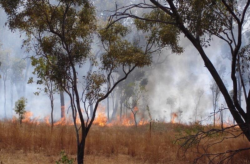 An Australian bushfire.