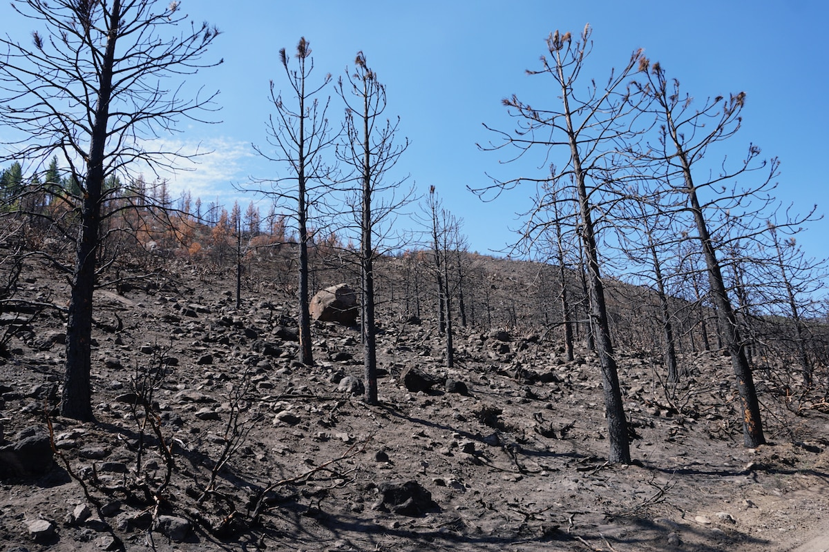After a wildfire, soils in burned areas often become water repellent,A hillside showing charred trees and soils that burned in California's Loyalton Fire during August 2020.